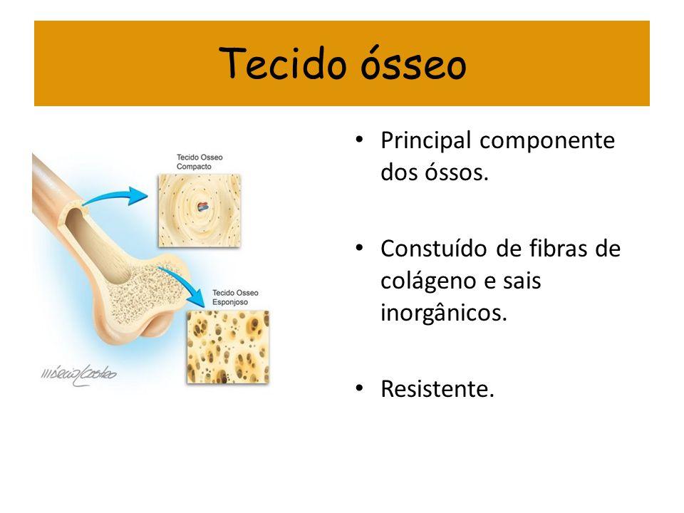 Tecido ósseo Principal componente dos óssos.