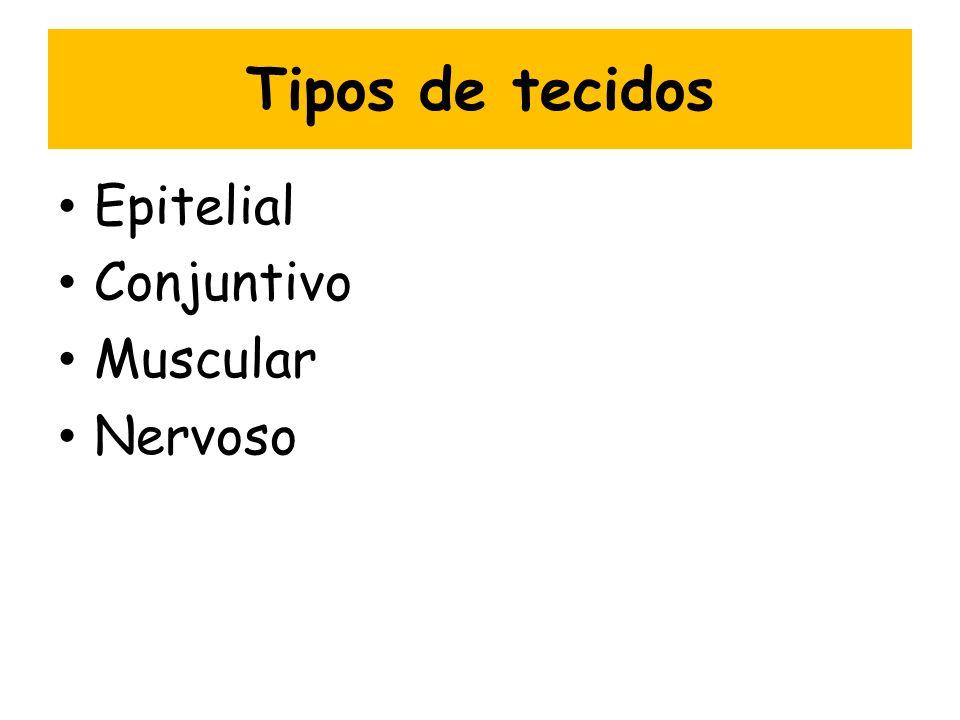 Tipos de tecidos Epitelial Conjuntivo Muscular Nervoso