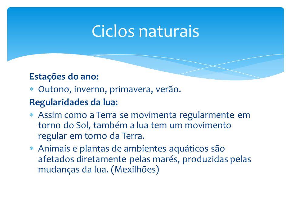 Ciclos naturais Estações do ano: Outono, inverno, primavera, verão.