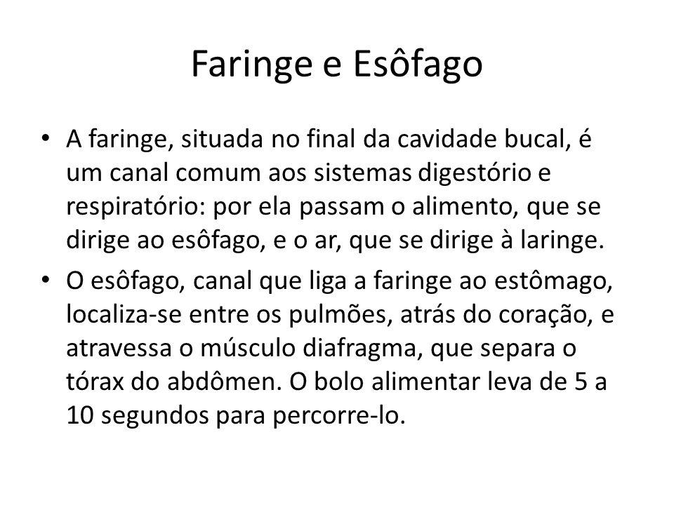 Faringe e Esôfago