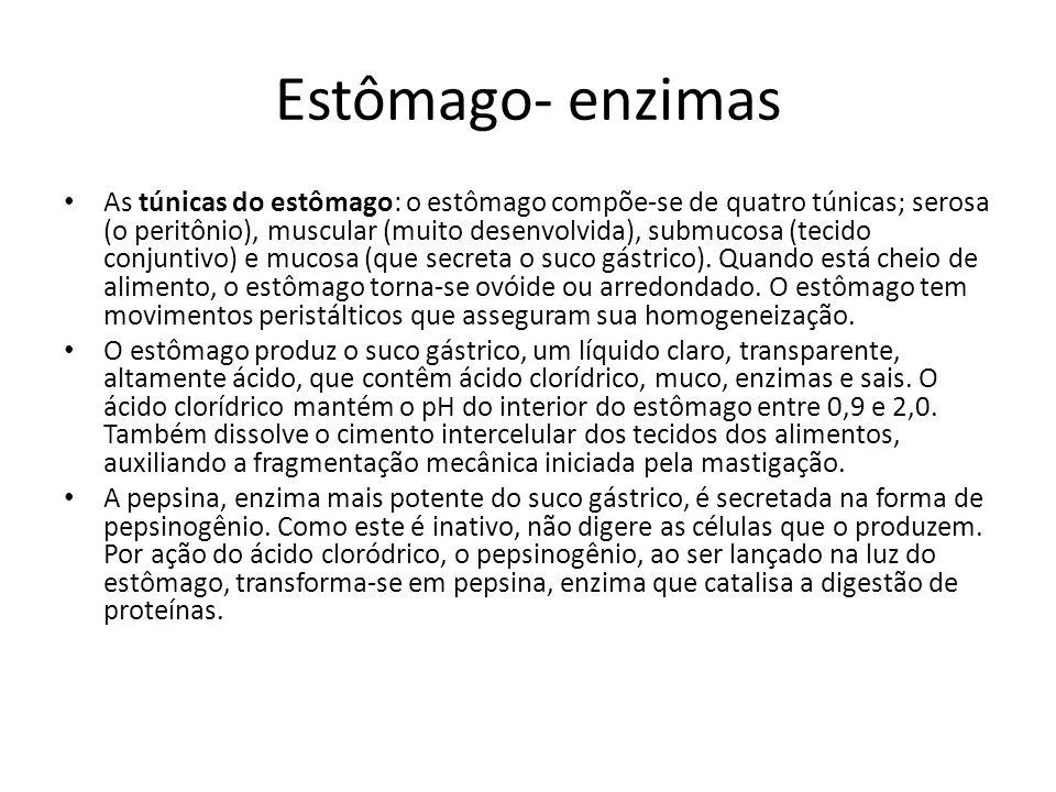 Estômago- enzimas