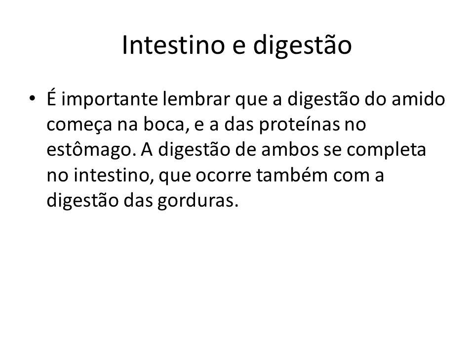 Intestino e digestão