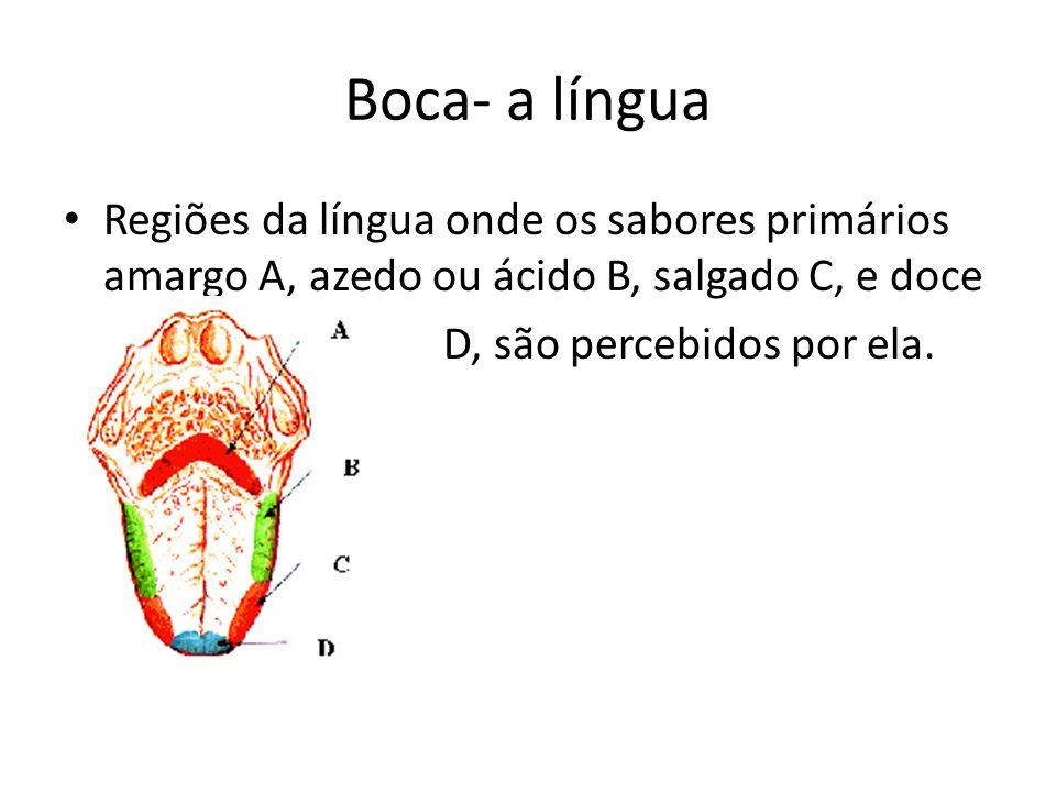 Boca- a língua Regiões da língua onde os sabores primários amargo A, azedo ou ácido B, salgado C, e doce.