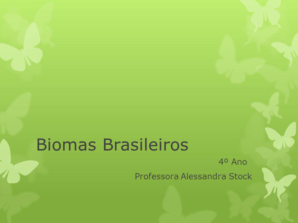 4º Ano Professora Alessandra Stock