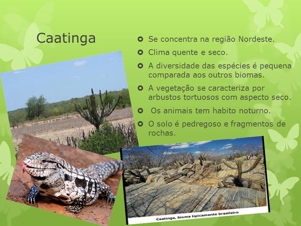 Caatinga Se concentra na região Nordeste. Clima quente e seco.