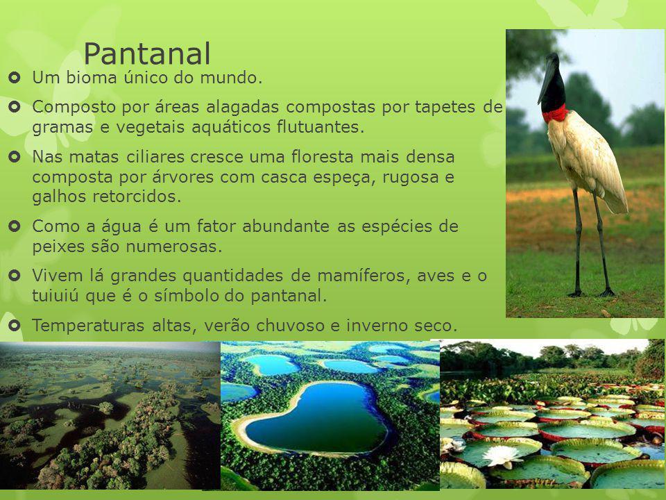 Pantanal Um bioma único do mundo.