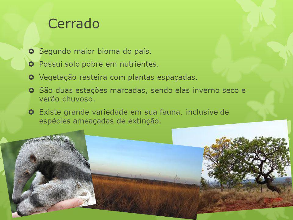 Cerrado Segundo maior bioma do país. Possui solo pobre em nutrientes.