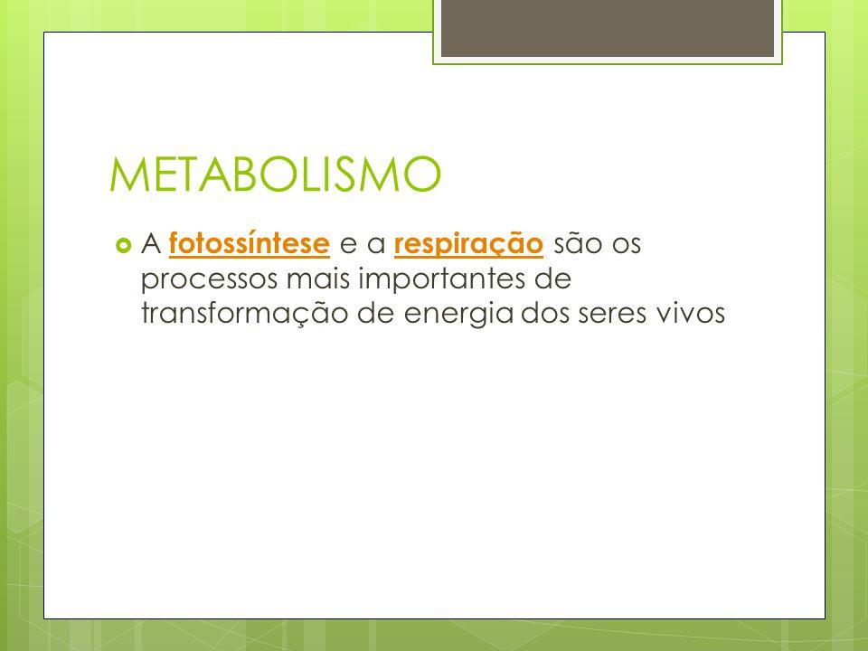 METABOLISMO A fotossíntese e a respiração são os processos mais importantes de transformação de energia dos seres vivos.