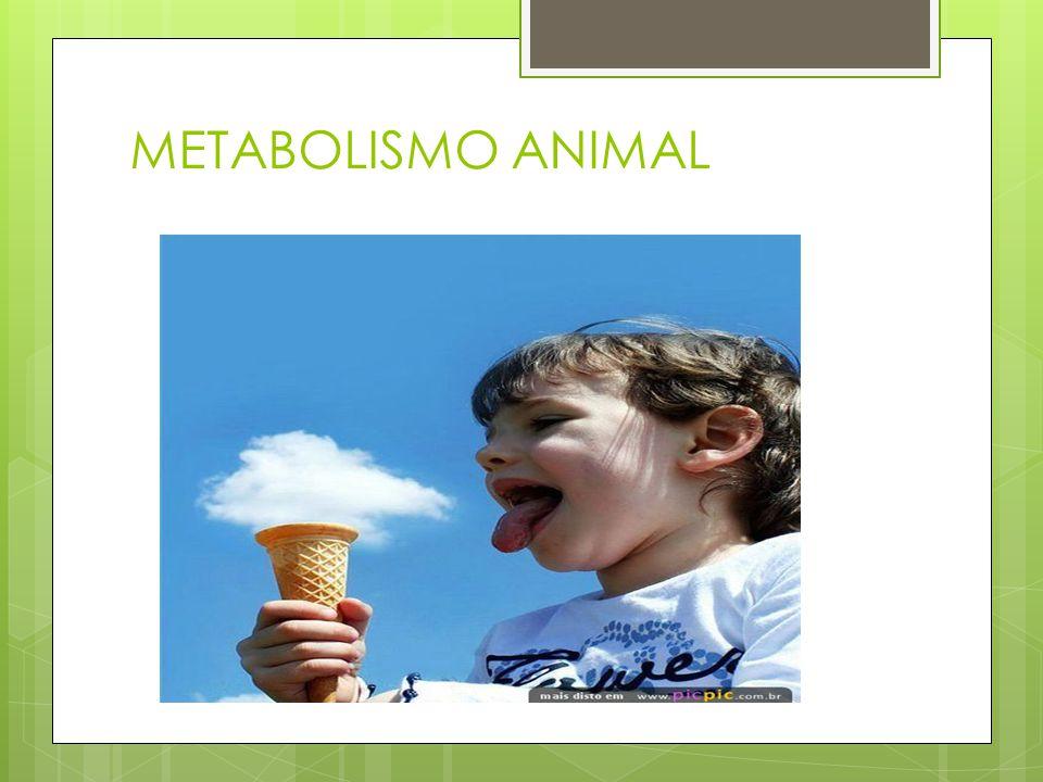 METABOLISMO ANIMAL