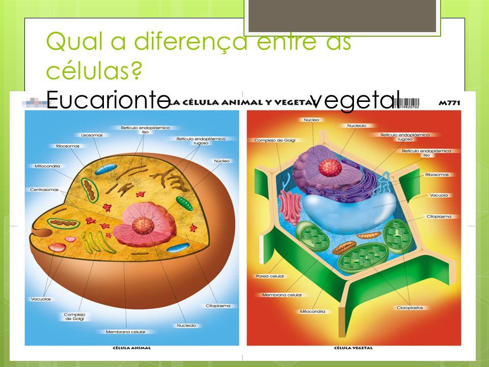 Qual a diferença entre as células Eucarionte vegetal