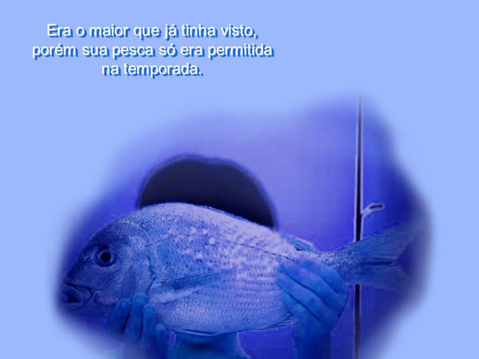 Era o maior que já tinha visto, porém sua pesca só era permitida na temporada.