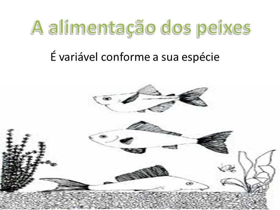 A alimentação dos peixes