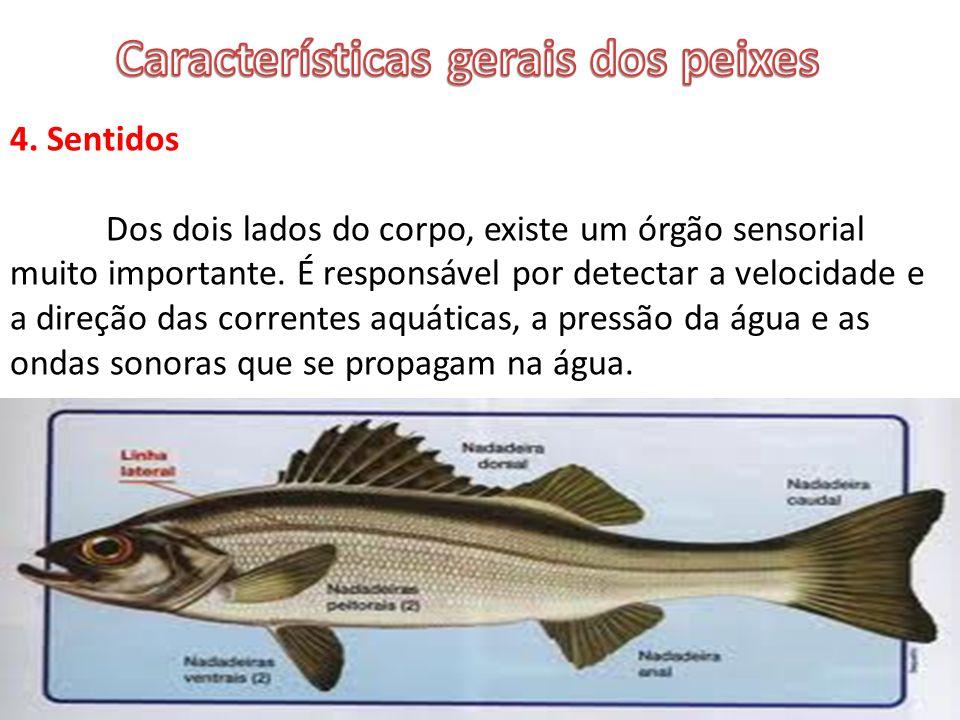 Características gerais dos peixes