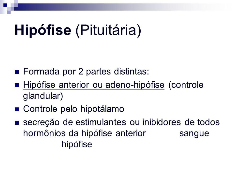 Hipófise (Pituitária)