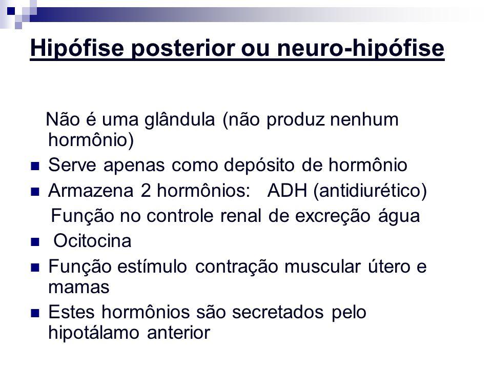 Hipófise posterior ou neuro-hipófise