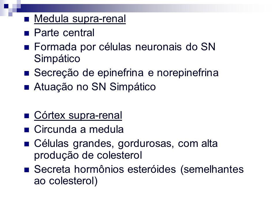 Medula supra-renal Parte central. Formada por células neuronais do SN Simpático. Secreção de epinefrina e norepinefrina.