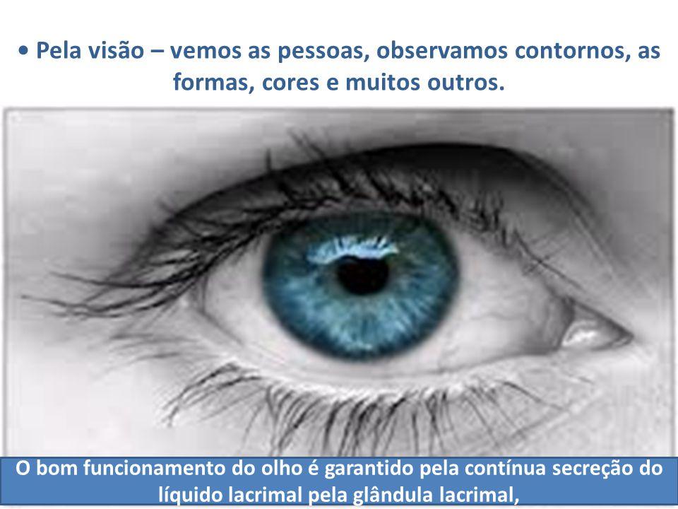 • Pela visão – vemos as pessoas, observamos contornos, as formas, cores e muitos outros.