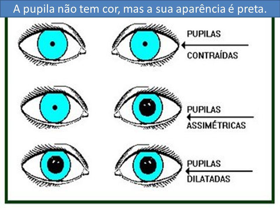 A pupila não tem cor, mas a sua aparência é preta.