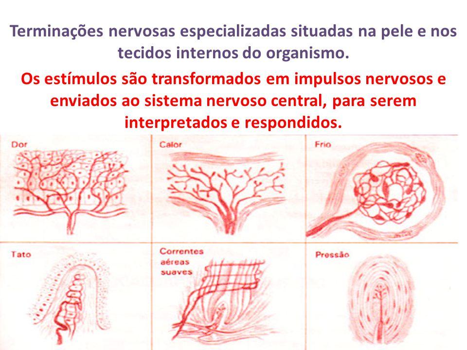 Terminações nervosas especializadas situadas na pele e nos tecidos internos do organismo.