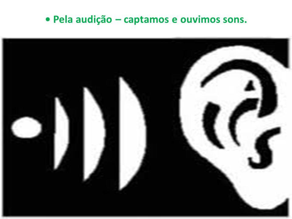 • Pela audição – captamos e ouvimos sons.