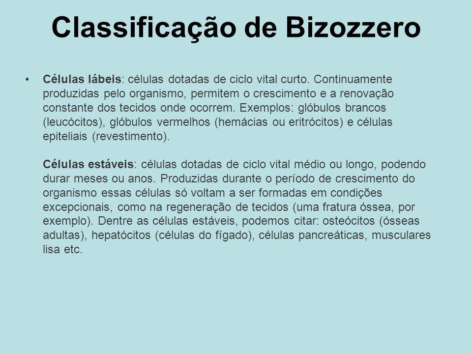 Classificação de Bizozzero