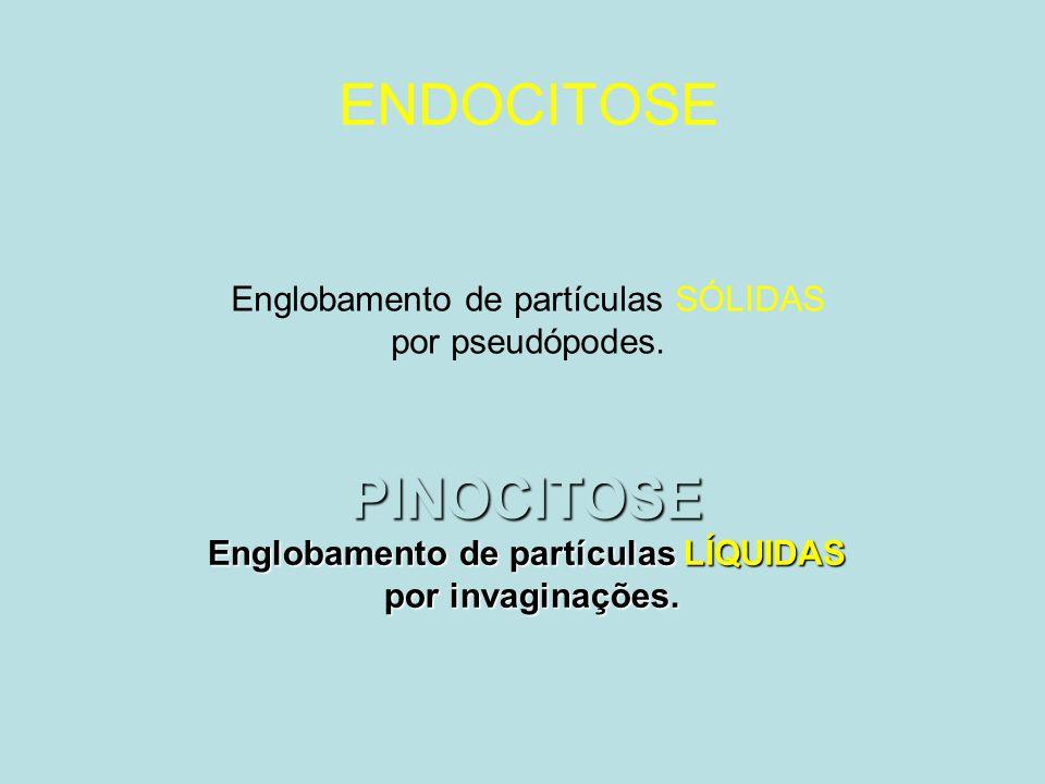 PINOCITOSE Englobamento de partículas LÍQUIDAS por invaginações.