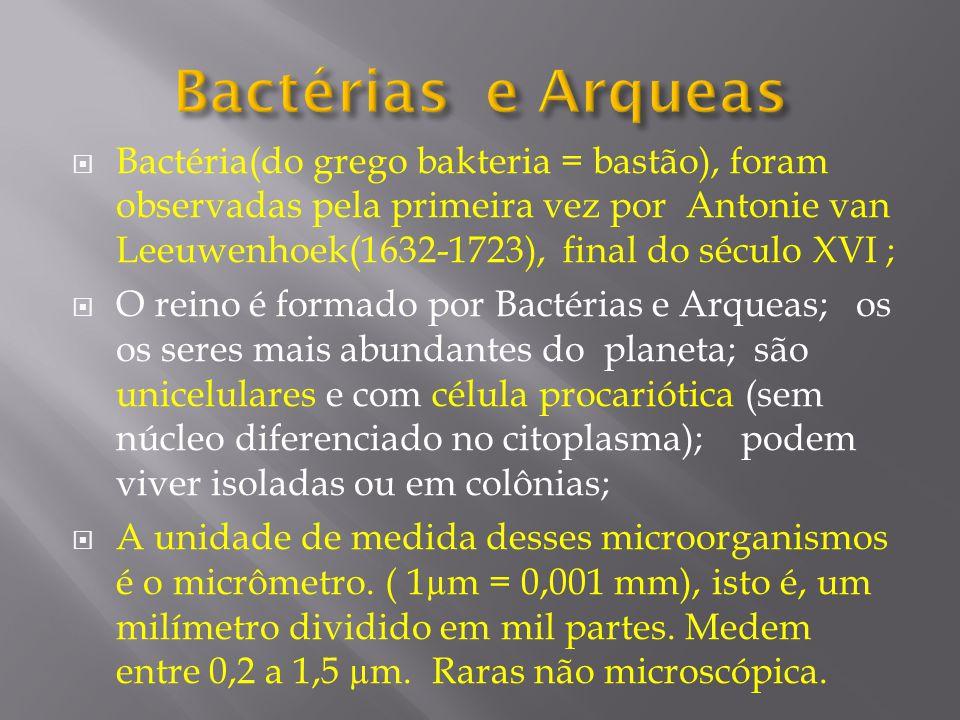 Bactérias e Arqueas