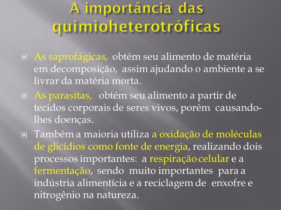 A importância das quimioheterotróficas