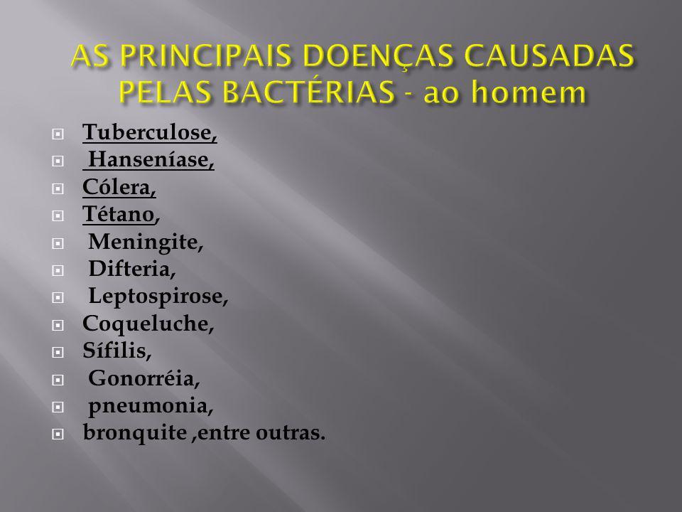 AS PRINCIPAIS DOENÇAS CAUSADAS PELAS BACTÉRIAS - ao homem