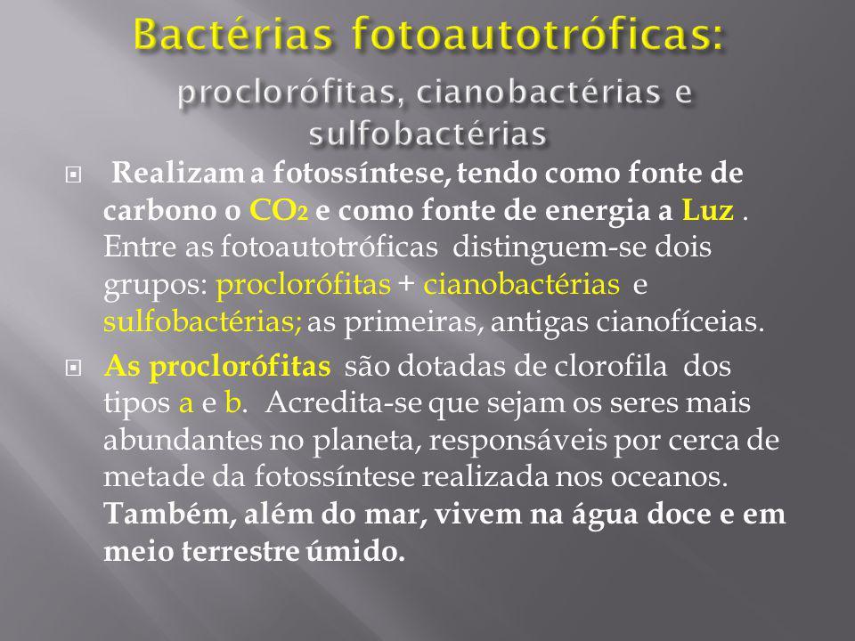 Bactérias fotoautotróficas: proclorófitas, cianobactérias e sulfobactérias