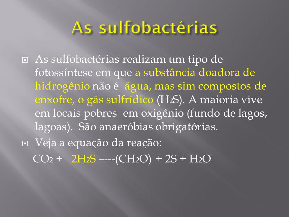 As sulfobactérias