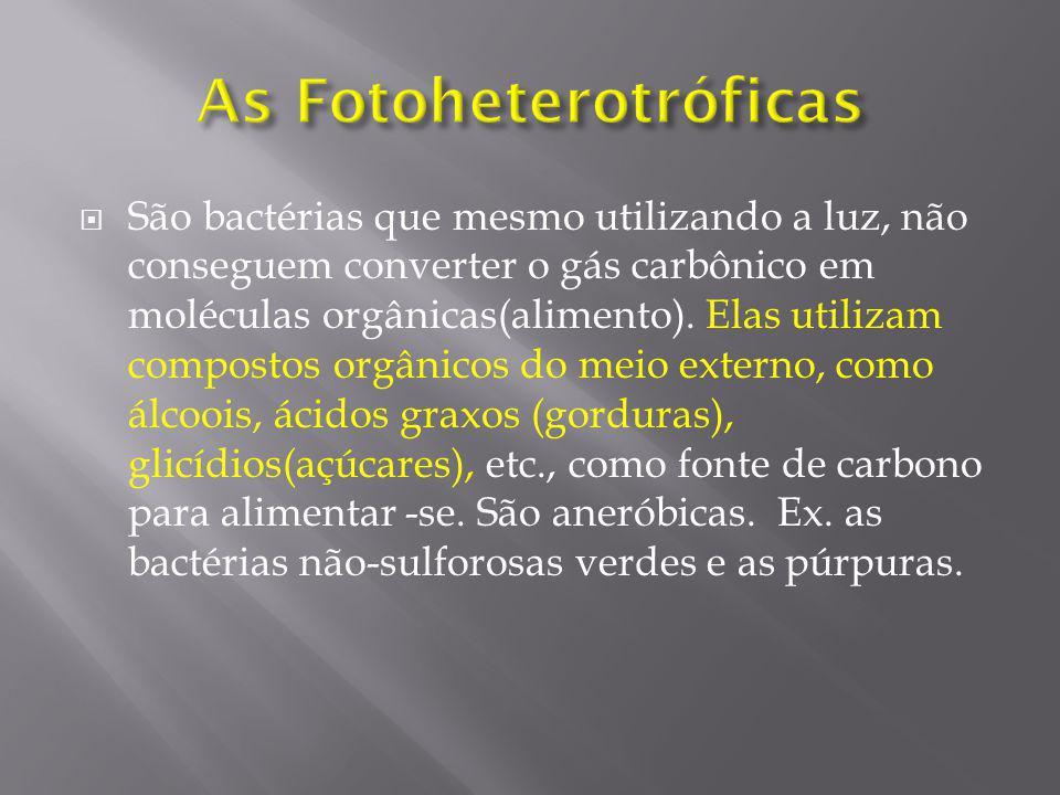 As Fotoheterotróficas