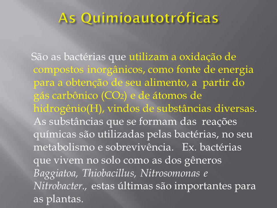 As Quimioautotróficas