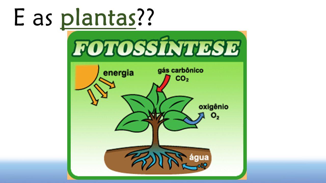 E as plantas