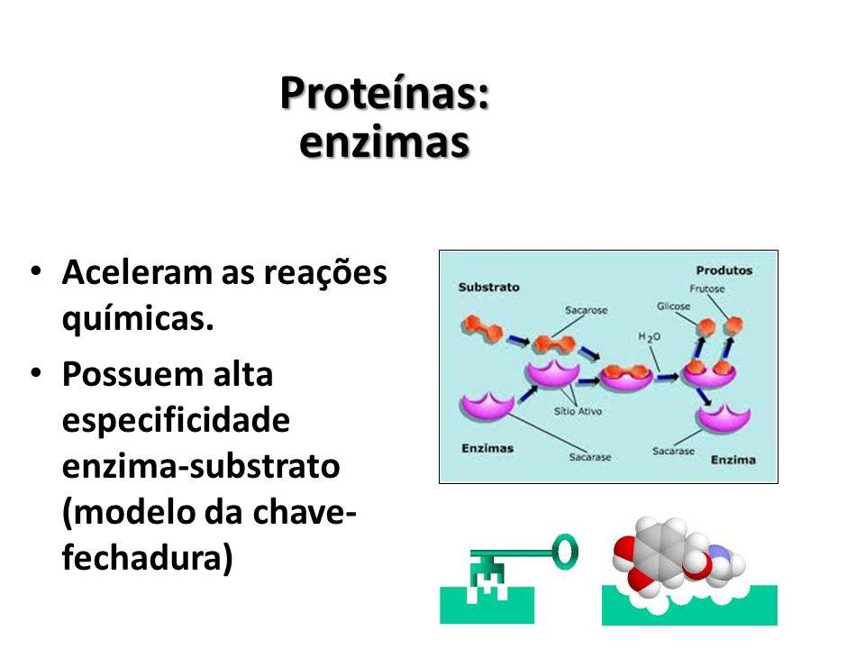 Proteínas: enzimas Aceleram as reações químicas.