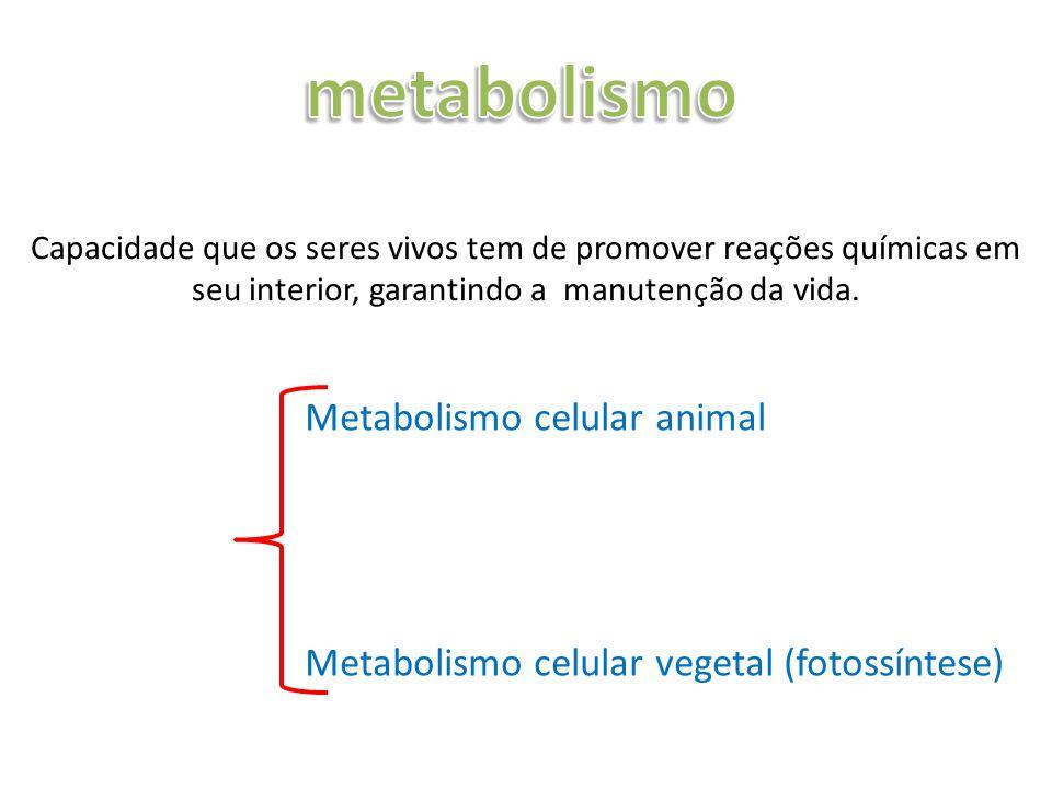metabolismo Metabolismo celular animal