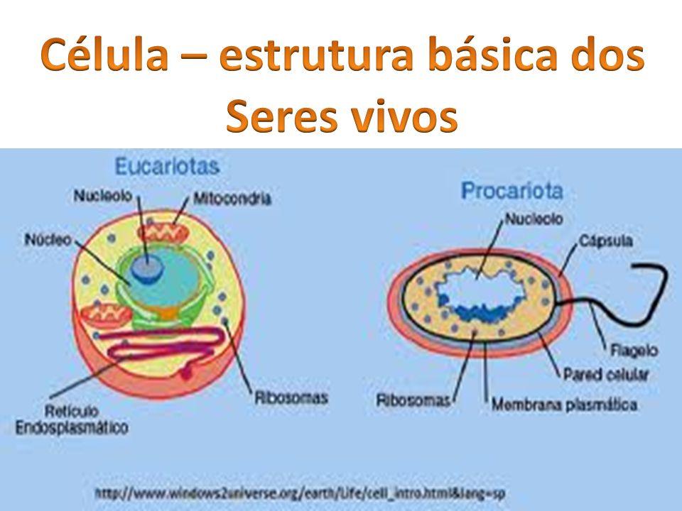 Célula – estrutura básica dos