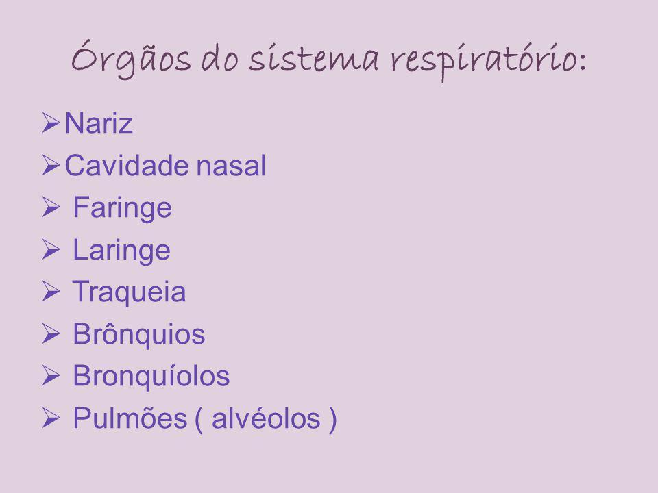 Órgãos do sistema respiratório: