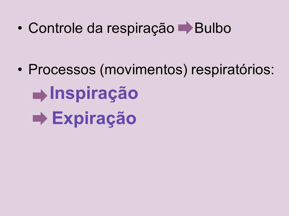 Expiração Controle da respiração Bulbo