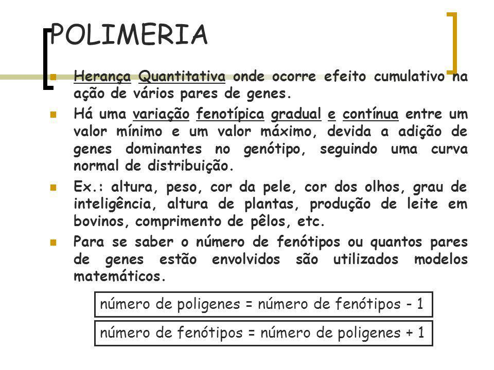 POLIMERIA número de poligenes = número de fenótipos - 1