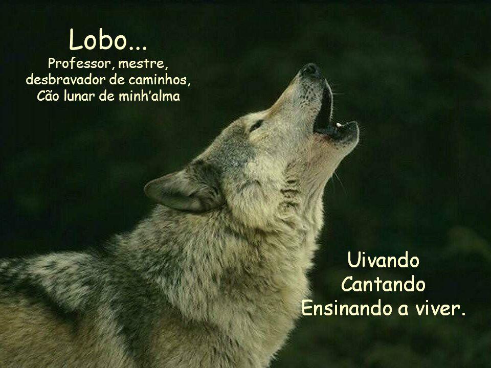 Lobo... Professor, mestre, desbravador de caminhos, Cão lunar de minh'alma