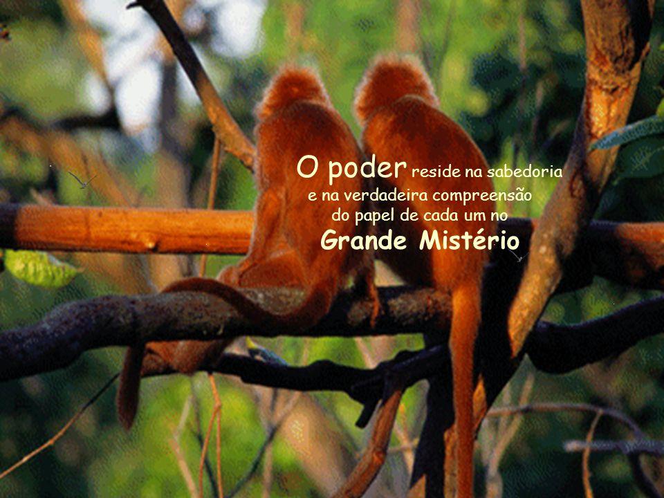 O poder reside na sabedoria e na verdadeira compreensão do papel de cada um no Grande Mistério