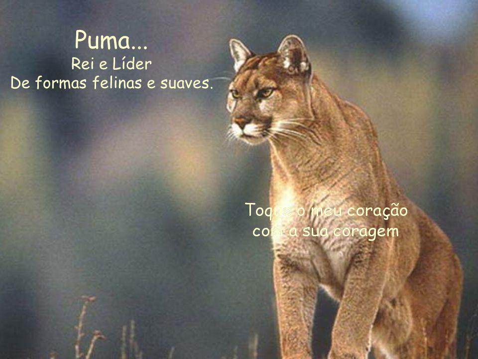Puma... Rei e Líder De formas felinas e suaves.