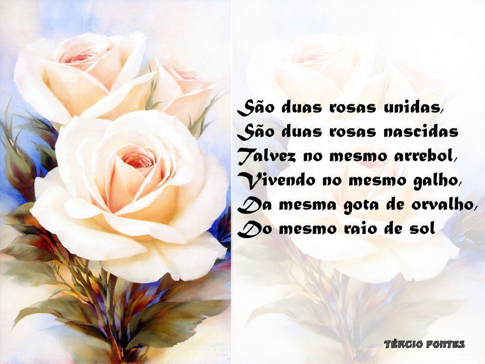 São duas rosas unidas, São duas rosas nascidas. Talvez no mesmo arrebol, Vivendo no mesmo galho, Da mesma gota de orvalho,