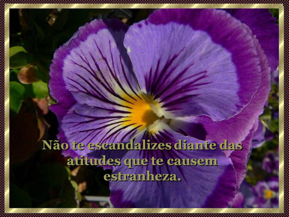 Não te escandalizes diante das atitudes que te causem estranheza.