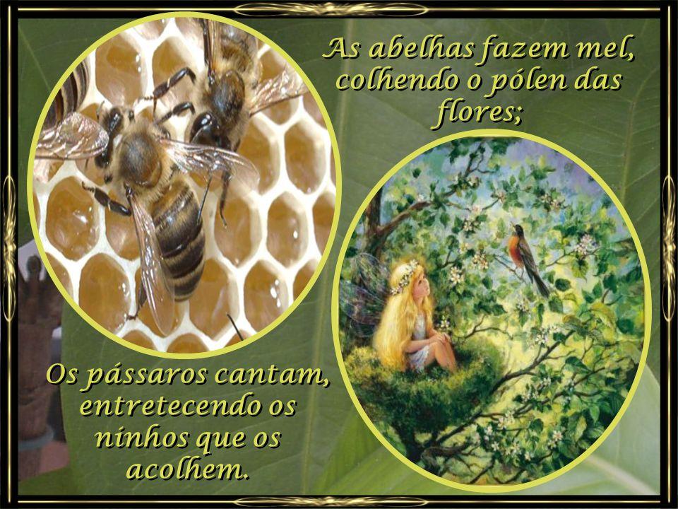 As abelhas fazem mel, colhendo o pólen das flores;