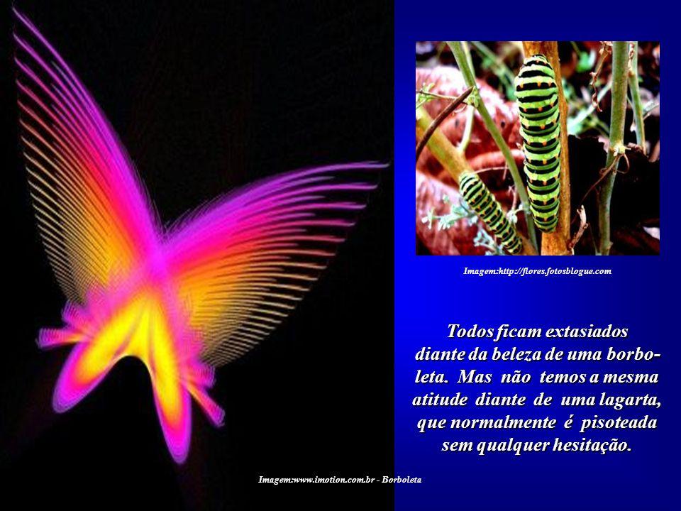 Todos ficam extasiados diante da beleza de uma borbo-