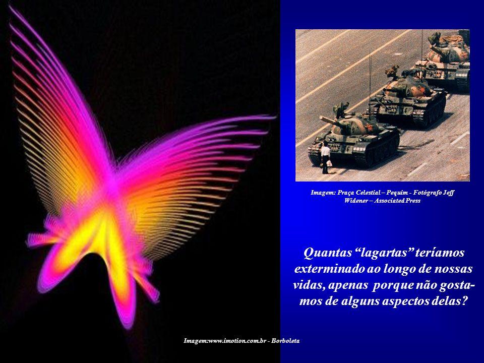 Imagem:www.imotion.com.br - Borboleta