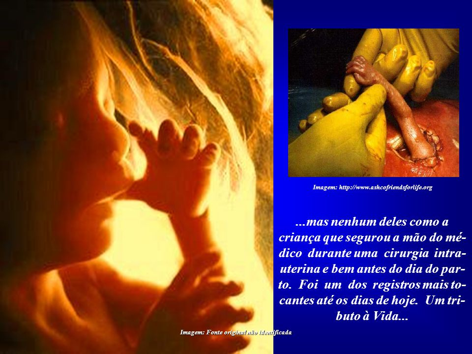 Imagem: http://www.ashcofriendsforlife.org