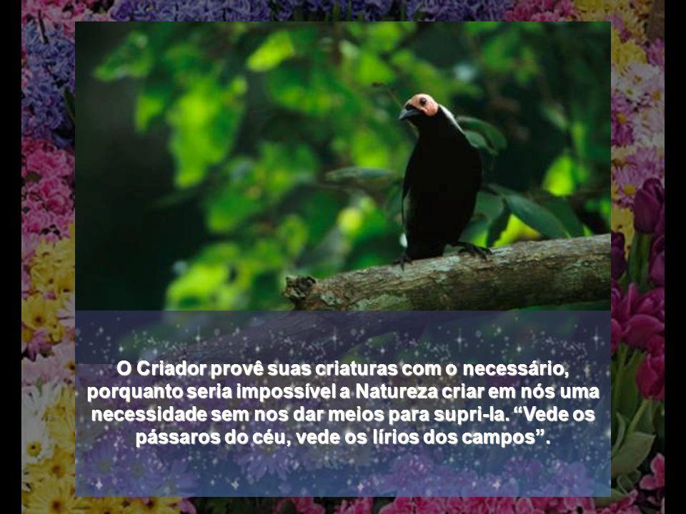 O Criador provê suas criaturas com o necessário, porquanto seria impossível a Natureza criar em nós uma necessidade sem nos dar meios para supri-la.
